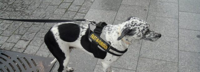 Latvian dog
